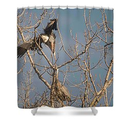 Shower Curtain featuring the photograph Courtship Ritual Of The Great Blue Heron by David Bearden