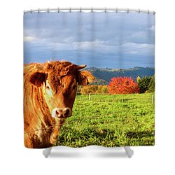 Cow And Autumn Colors  Shower Curtain