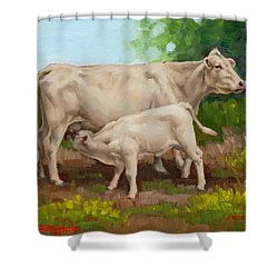 Cow  And Calf In Miniature  Shower Curtain