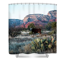 Cow At Red Rock Shower Curtain