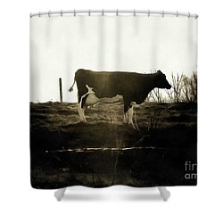 Cow - Black And White - Profile Shower Curtain