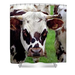 Cow Closeup Shower Curtain