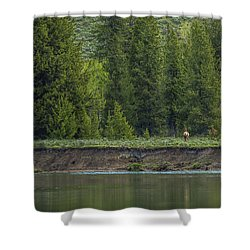 Cow Elk On The Riverbank Shower Curtain