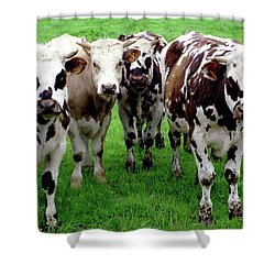 Cow Group Shower Curtain