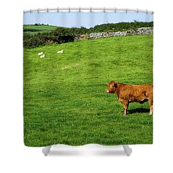 Cow In Pasture Shower Curtain