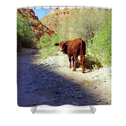 Cow In The Canyon Shower Curtain