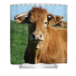 Cow Portrait Shower Curtain by Jean Bernard Roussilhe