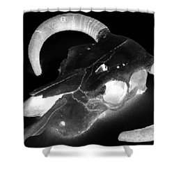 Cow Skull Shower Curtain by Joseph Frank Baraba