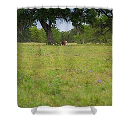 Cow Surrounded By Her Fans Shower Curtain