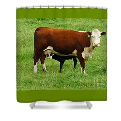 Shower Curtain featuring the painting Cow With Calf by Debra Crank
