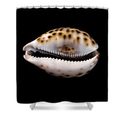 Shower Curtain featuring the photograph Cowry Sea Shell by Jim Hughes