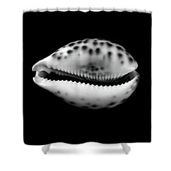 Shower Curtain featuring the photograph Cowry  Shell In Black And White by Jim Hughes