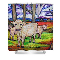 Cows And Fallen Gum Trees Shower Curtain by Dianne  Connolly
