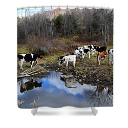 Cows And Reflection New York State Shower Curtain by Diane Lent