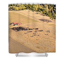 Cows And Trucks Shower Curtain