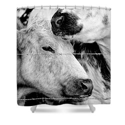 Shower Curtain featuring the photograph Cows Behind Barbed Wire by Nick Biemans