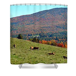 Cows Enjoying Vermont Autumn Shower Curtain by Catherine Sherman