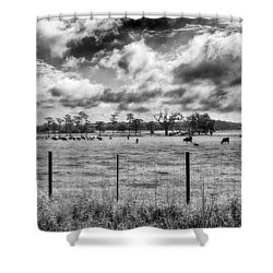 Shower Curtain featuring the photograph Cows by Howard Salmon