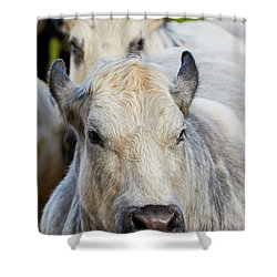 Shower Curtain featuring the photograph Cows In A Row by Nick Biemans