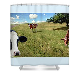 Cows In Field, Ver 4 Shower Curtain