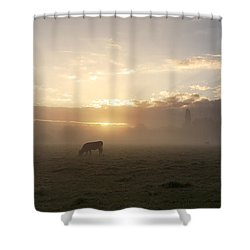 Cows In The Mist Shower Curtain