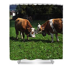 Cows Nuzzling Shower Curtain by Sally Weigand