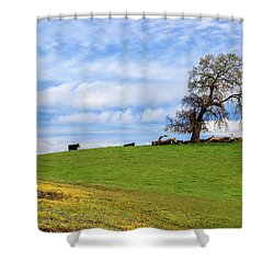 Shower Curtain featuring the photograph Cows On A Spring Hill by James Eddy
