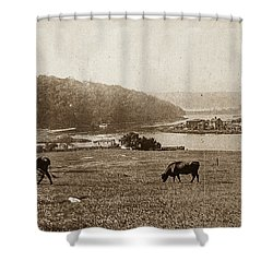 Shower Curtain featuring the photograph Cows On Baker Field by Cole Thompson