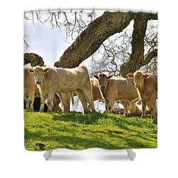 Cows Under Oak #2 Shower Curtain by Amy Fearn