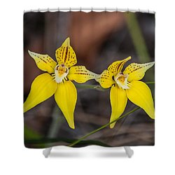 Cowslip Orchid Australia Shower Curtain