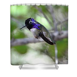 Coy Costa's Hummingbird Shower Curtain