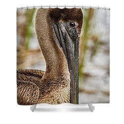 Coy Pelican Shower Curtain by Jean Noren