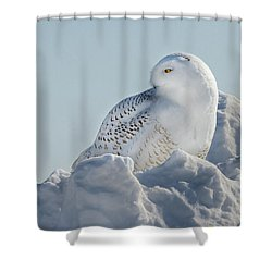 Shower Curtain featuring the photograph Coy Snowy Owl by Rikk Flohr