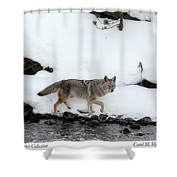 Coyote In Yellowstone National Park Shower Curtain