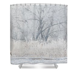 Coyote On The Hunt Shower Curtain