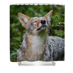 Coyote Soaking Up The Morning Sun Shower Curtain