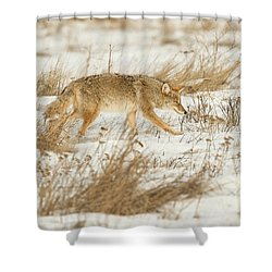 Coyote Stalk Shower Curtain