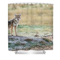 Shower Curtain featuring the photograph Coyotee by Kelly Marquardt
