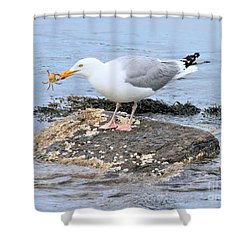 Crab Legs Shower Curtain