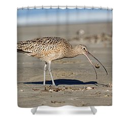 Crab Toss - Curlew Shower Curtain