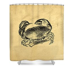 Shower Curtain featuring the drawing Crab Vintage by Edward Fielding