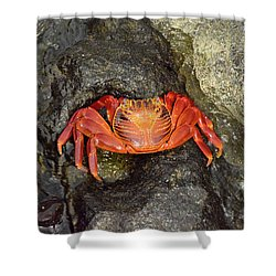 Crab Shower Curtain