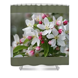 Crabapple Blossoms 12 - Shower Curtain
