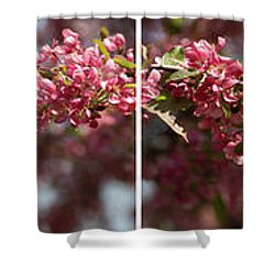 Crabapple In Spring Panoramic Map Shower Curtain