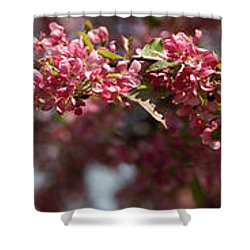 Crabapple In Spring Panoramic Shower Curtain