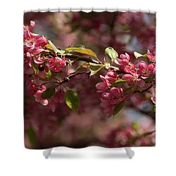 Crabapple In Spring Section 3 Of 4 Shower Curtain