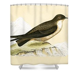 Crag Swallow Shower Curtain by English School