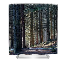 Craig Dunain - Forest In Winter Light Shower Curtain