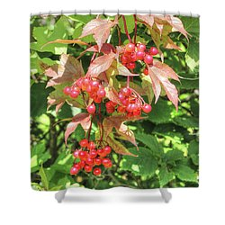 Cranberry Cluster Shower Curtain