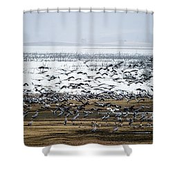Shower Curtain featuring the photograph Crane Dance by Torbjorn Swenelius